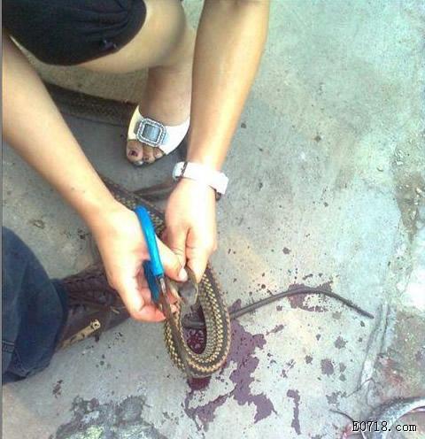 杀蛇1.jpg