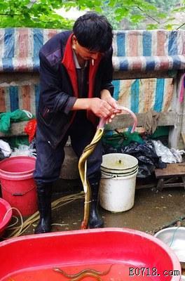 杀蛇2.jpg